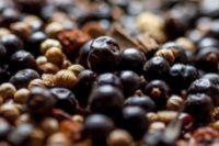 Juniper berries for Caorunn Scottish gin